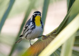 Birds in USA
