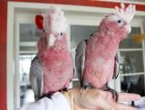 My baby birds