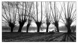 alberimani