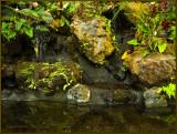 9225.Garden Pond