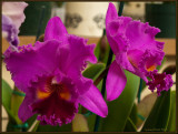 9245.Orchids