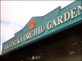 9258.Akatsuka Orchid Gardens