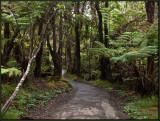 9283.Jungle Path