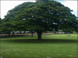 9330.Monkey Pod Treeat Cemetary