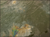 9360.Oil SlickFrom the Arizona