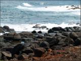 9535.Rocky Beach-2