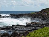 9549.Ocean Action