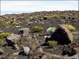 9673.Atop Haleakala Crater