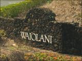 9718.WaiolaniLuncheon Spot