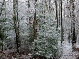 0149.1st snow-2011