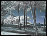 HE LIKED INFRARED PHOTOGRAPHY TOO