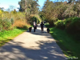 TWO NEWFINDLAND DOGS WALKING WITH THEIR MASTERS TO HIDDEN BEACH PARK