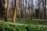 springtime_2011