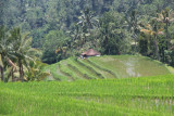 Jatiluwih -Bali -INDONESIA