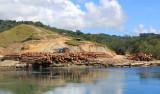 Logging - Nggela Sule
