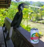 Hornbill and beer at Napatana Lodge