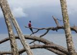 Alotau - Milne Bay