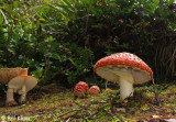 Mushrooms,   Ulva Island  1