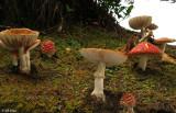 Mushrooms,   Ulva Island  3