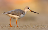 Bird Species (577)