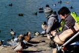 Quack, quack...