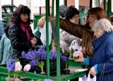 Market scene in Lovech