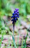 Little Spring flower