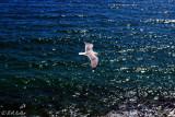 ...free like a bird