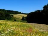 Fields of summer...