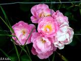 Hidden beauties...