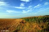 Fields...
