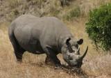 female? rhino