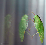 Grasshopper dual reflections