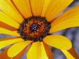 Wildflowers Rossmoor Parkway.jpg