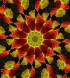 Kaleidoscope: Mex Poppy  # 3