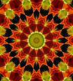 Kaleidoscope: Mex Poppy #  5