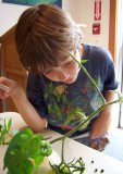 Butterfly Festival: Inspecting Hornworm