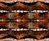 White Pine Darts - Xestia badicollis - Texture Map