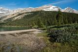 Greenery At Bow Lake