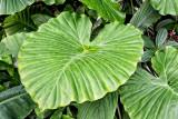 Jungle Salad