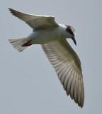 seagull_2011