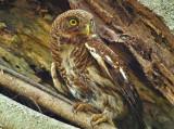 owl 2012