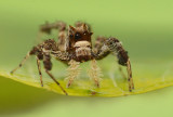 spiders_2012