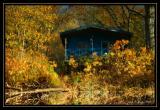 Autumn Watercolors II