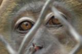 San Antonio Zoo 2008