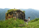 Donkey in front of ruin