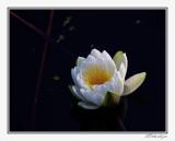 IMG_9386_11x14.jpg