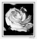 Flower Shop-009-2.jpg