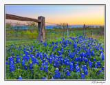 Bluebonnets-3519-20-Edit.jpg