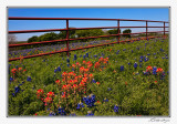 Bluebonnets-3607-Edit.jpg